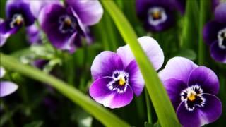 Pochill ~ Violet Theme [Nick Version]