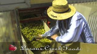 The Best hops picker in Colorado. Leroux Creek Farms Hops Harvest