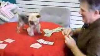 Poker Playing Dog