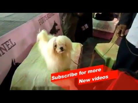 Wow ! Most Amazing dog breeds worldwide | Maltese dog |