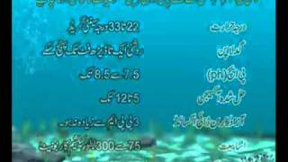 Fish farming in pakistan part-1.flv