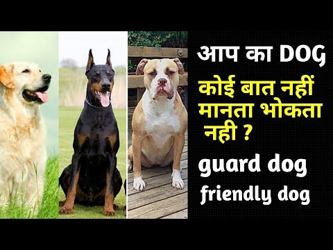 How To Make a Guard Dog or Friendly Dog / डॉग बात नहीं मानता? / Dog Tips