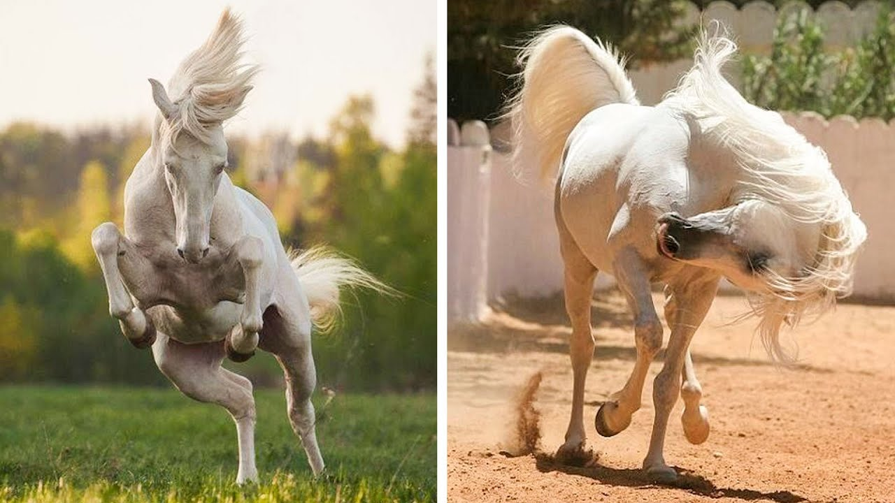 Funniest and Cute Horse Videos Compilation cute moment of the horses - Cute Baby Horses #1