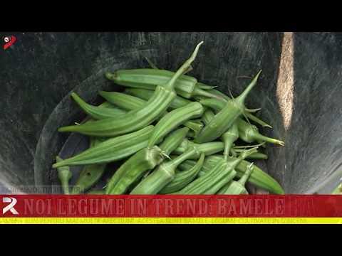 Noi legume în trend: bamele
