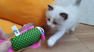 Baby Cat's First Toy! / 아기 고양이…
