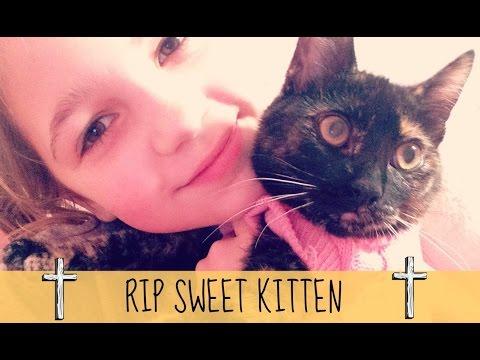 My Kitten DIED | Tribute to COOKIE | RIP my friend