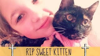 My Kitten DIED | Tribute to COOKIE | RIP my friend
