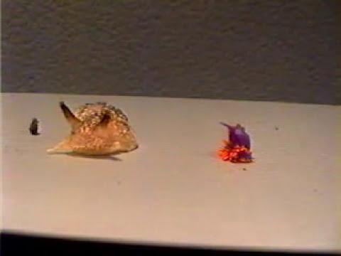 Surprising Sea Slug Dance | Video