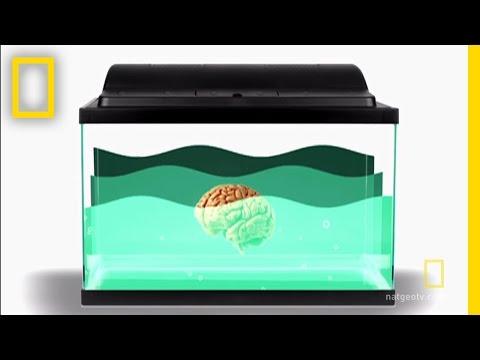 The Biggest Brain | Brain Games
