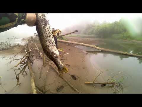 Рыбалка на тайдоне 2019