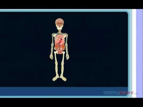 Human Body Lesson For Kids Learn About The Human Body Youtube