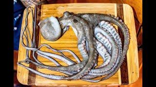 Catch and Cook OCTOPUS | BEST OCTOPUS DISH | Takoyaki!