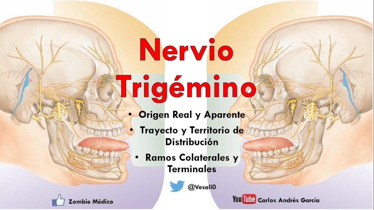 Anatomía - Nervio Trigémino (Ganglios, Ramos Oftálmico, Maxilar y ...