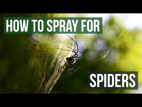 How To Spray To Get Rid Of Spiders