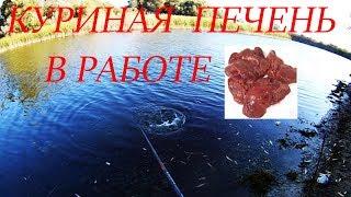 Рыбалка осенью  на куриную печень такую рыбу я не ожидал поймать