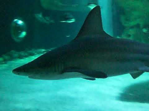 France aquarium