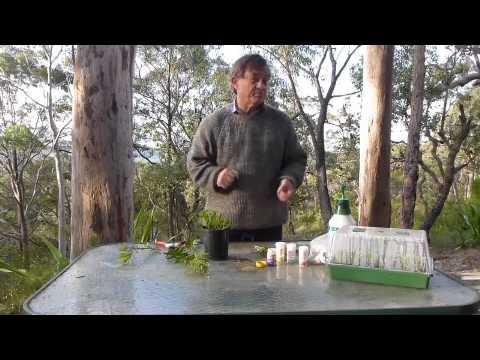 Plant propagation by stem cuttings