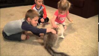 Fluffy 2: Evil Cat Returns spoof movie preview