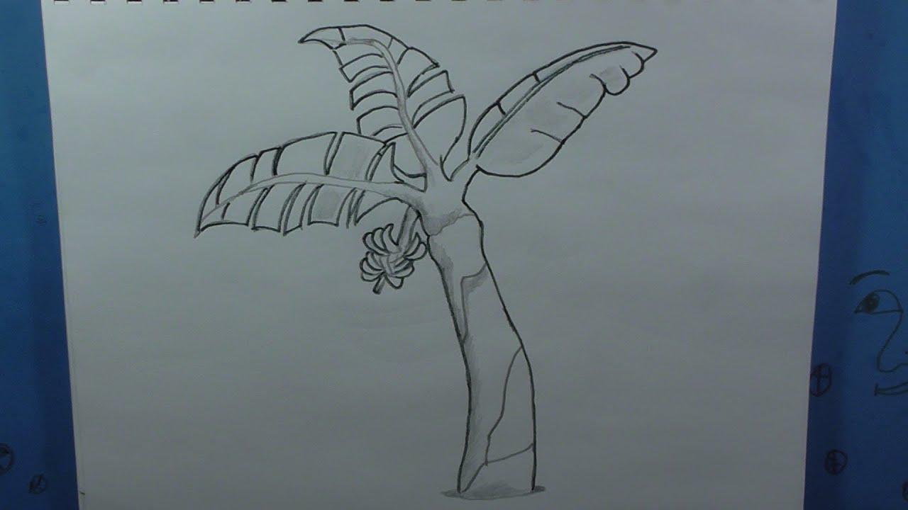 Uncategorized How To Draw A Banana Tree how to draw a banana tree or plantain youtube