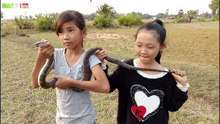amazing two girls village snake on the rice fields easy to catch black snake in my country