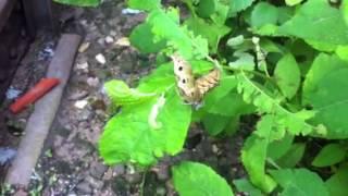 Большая гусеница.(Гусеница по траве лезет., 2013-07-26T09:43:52.000Z)
