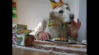 Funny Dog - Funny Pranks -  Funny Animals - Happy Birthday To Sara - Golden Retriever - Happy Dog