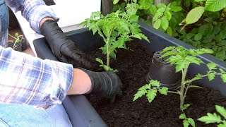 Maj w ogrodzie. Kalendarz ogrodnika na 11.05 - 17.05. Prace ogrodnicze w maju