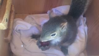 Squirrel Rescue Saga. Must See