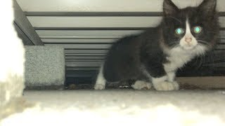 I saved cat kitten for the first time in my life, 6 hours from discovery to rescue.