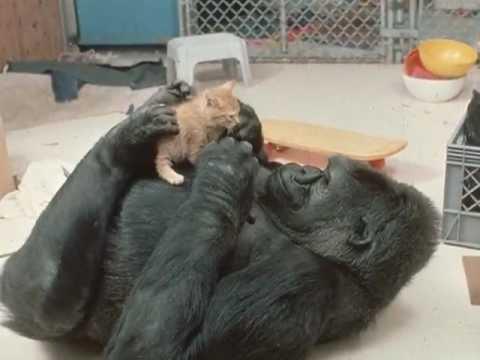 Koko's Kittens (an empathic journey)