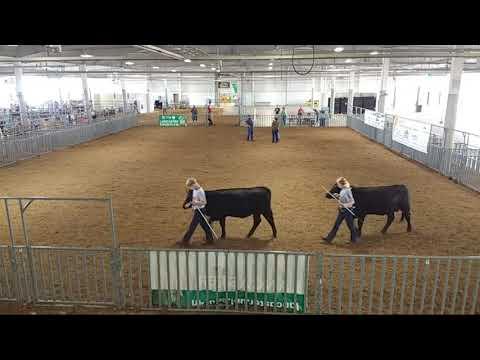 4-H/FFA Beef Show at 2020 Lancaster County Super Fair