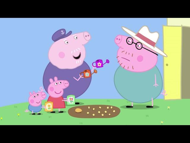 Peppa Pig 粉红猪小妹 第五季12【佩奇與喬治的花園】中文版