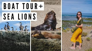 Spotting SEA LIONS in Peninsula Valdes on a Boat Tour | Chubut, Argentina