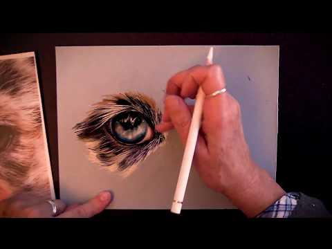 Australian Shepherd Eye and Fur - Pastel Painting Demo