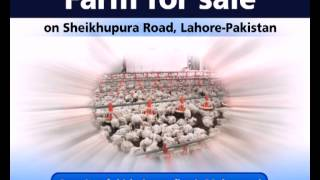 Farm for sale on Sheikhupura Road, Lahore, Pakistan