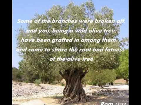 The *Olive Tree*  (Song by Zemer Levav)