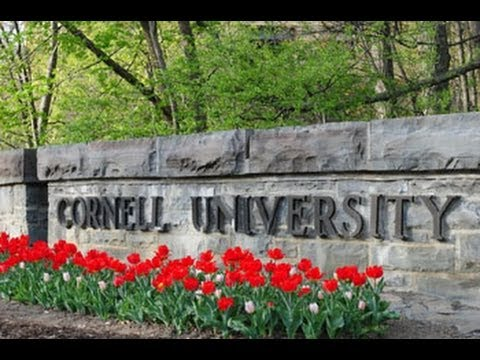 Cornell University. Положение мусульман.