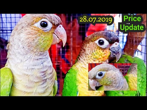 kolkata-bird-market-in-galiff-street-visit-&-price-update-28/07/19-|-the-biggest-bird-market-in-asia