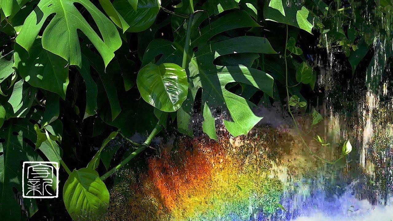 植物体のメロディー、モンステラの若葉