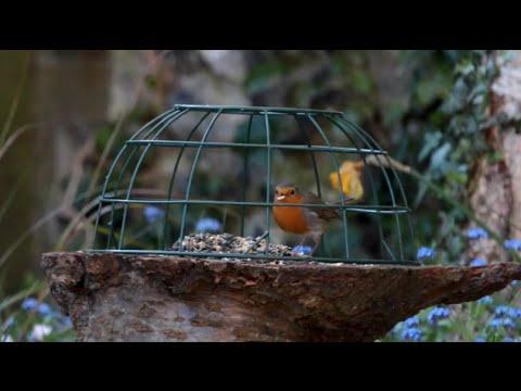 The Birds... and their garden in Burnham Market, North Norfolk