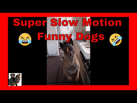 Funny Working Dogs - Slow Mo catching treats