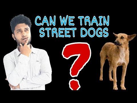 Street Dogs Training Ability