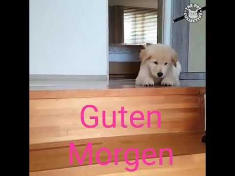 Guten Morgen Tiere Youtube