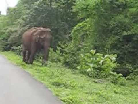 Elephant in Mudumalai