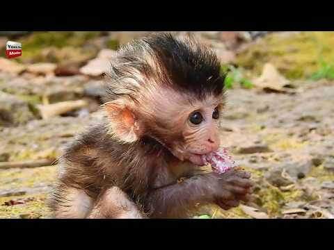 What Asly do on pe pe Donnie? Adorable baby monkey Youlike Monkey 1724