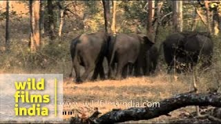 Group of elephants in Bandipur national park