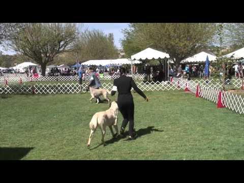 Del Sur Kennel Club Dog Show 3-19-16