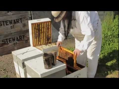 Bees Love Organic Farms