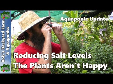 Reducing Salt Levels - The Plants Aren't Happy #Aquaponic Update