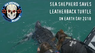 Sea Shepherd Saves Leatherback Turtle on Earth Day 2018